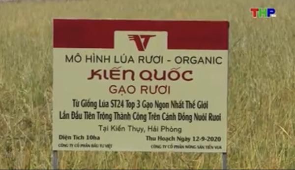 mo-hinh-gao-ruoi-kien-quoc